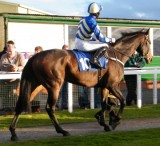 Equine Case Study - Thoroughbred Racehorse