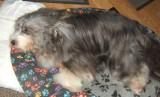 Canine Case Study: Elderly Dog