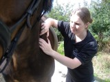 Equine Massage for Horse Owners Course *NEW DATE*