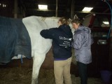 Equine Massage for Horse Owners Courses