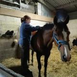 Equine Clinics at Richmond and Spaldington