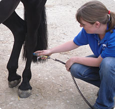 Low Level Laser Therapy Liz Harris Animal Physical
