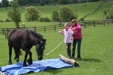 Lynn Henry, natural horsemanship teacher and author, Bramhope, Leeds