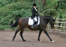 Deborah Carr-Davidson - Foxholm Stud, Billingham