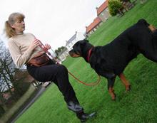 Heather Stevens, We Train Any Dog, North Yorkshire